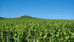 French-wine-appellation
